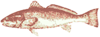 – Go Fish –